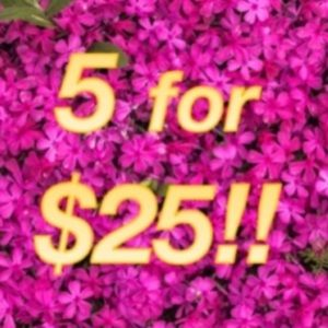 Sephora Makeup - 🔝5 for $25!💖Laura Mercier Caviar Volume Mascara